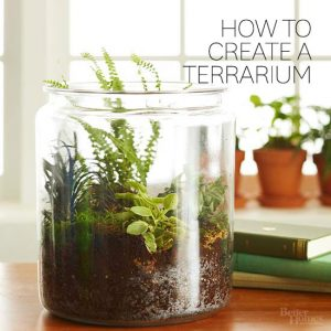 how to terrarium